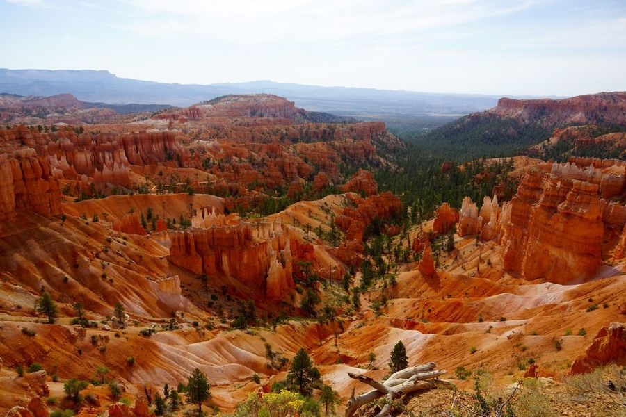 Bryce Canyon Hiking Hoodoos Mountains National Park Sandstone Sonyalpha Summer Sun Tranquility