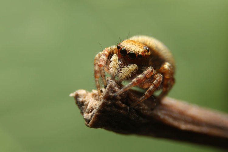 Close-up of spider on twig