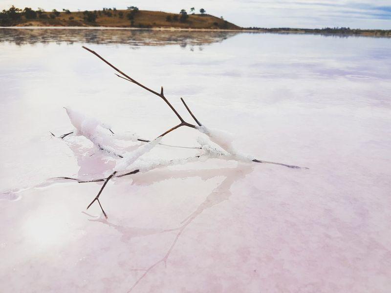 Lake Crosbie salt lake, Victoria, Australia Reflection Lake Salt - Mineral Water No People Outdoors Landscape Day Tranquility Nature Salt Flat Pink Lake Pink Australia Travel