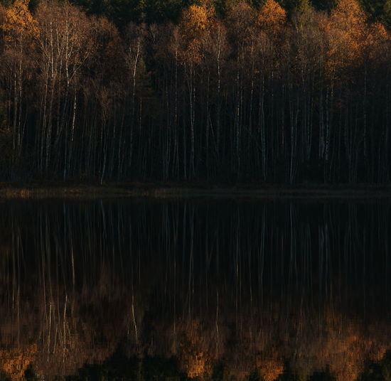 Trees reflecting on calm lake during autumn at forest