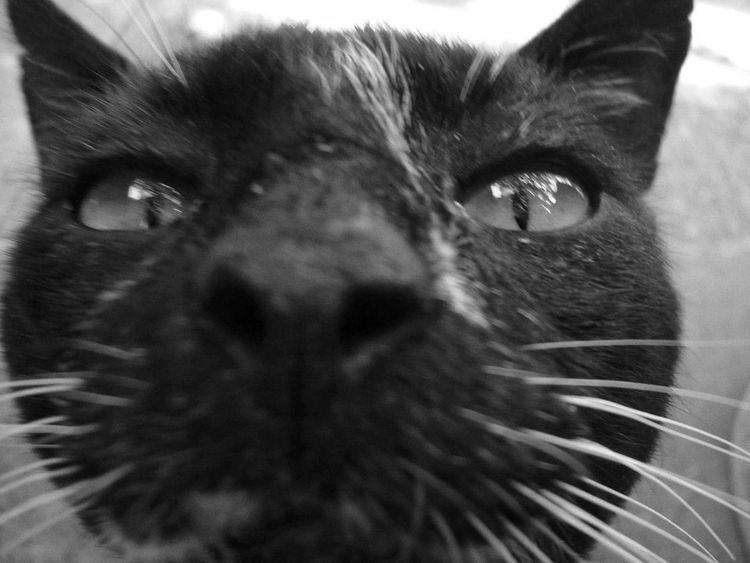 Pets One Animal Domestic Animals Domestic Cat Animal Themes Close-up Looking At Camera Feline Mammal Whisker Animal Body Part Animal Head  Portrait Animal Eye Cat No People Indoors  Day