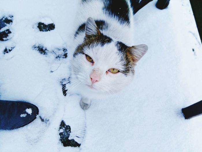 Close-Up Of Cat In Snow