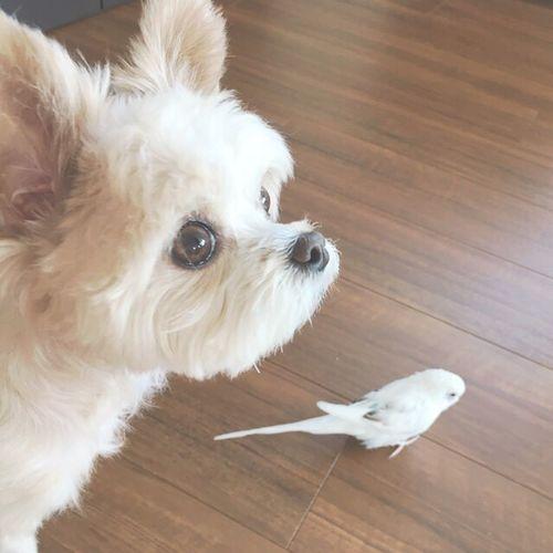 Love Dog Bird セキセイインコ 愛鳥 愛犬