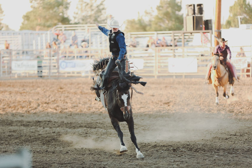 Rodeo Bucking Broncos Day Domestic Animals Field Horse Horse Photography  Livestock Mammal Outdoors