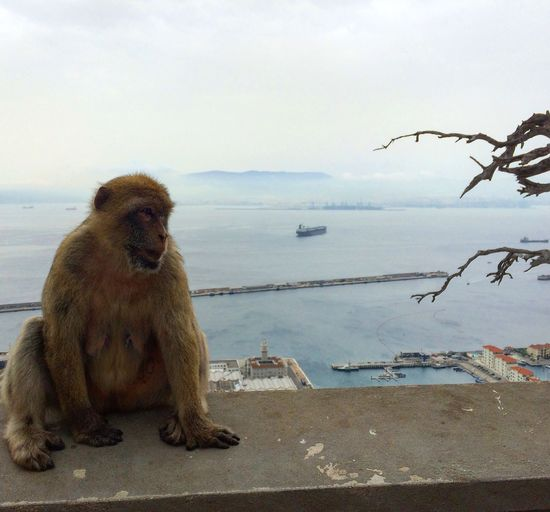 Animal Themes Animals In The Wild Monkey Sea Sky Horizon Over Water Outdoors No People Nature EyeEmNewHere Travel Destinations Gibraltar Beauty In Nature Breathtaking Skyporn EyeEmNewHere