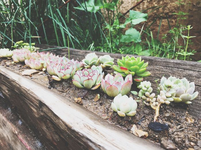 Growth Plant Nature No People Day Succulent Plant Cactus Beauty In Nature Outdoors Botany Sunlight High Angle View Green Color