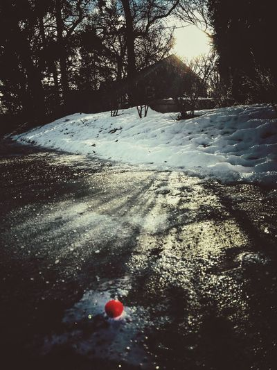 Cherry Frozen