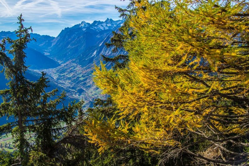 col of lien,valais,swiss Tree Mountain Plant Beauty In Nature Autumn Scenics - Nature Tranquility Mountain Range Tranquil Scene No People Nature Day Non-urban Scene Idyllic Sky Green Color Growth Change Outdoors Environment Snowcapped Mountain Coniferous Tree Formation