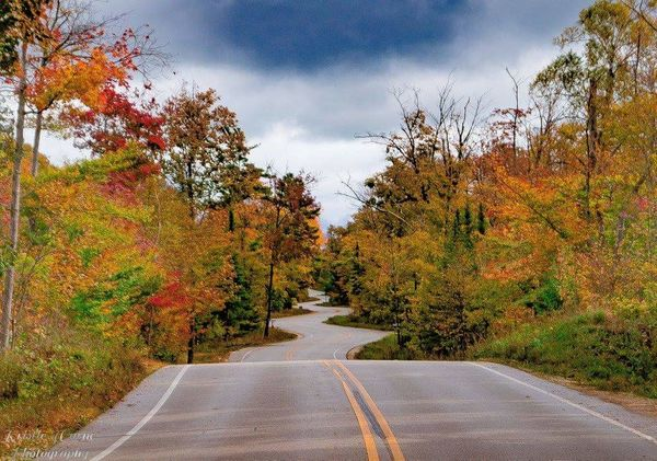 Fall Fall Beauty Fall Colors Door County Windy Road Autumn Tree Road The Way Forward Outdoors Landscape Scenics Nature