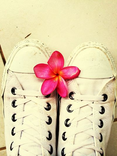 Buzios Brasil Flower Holiday