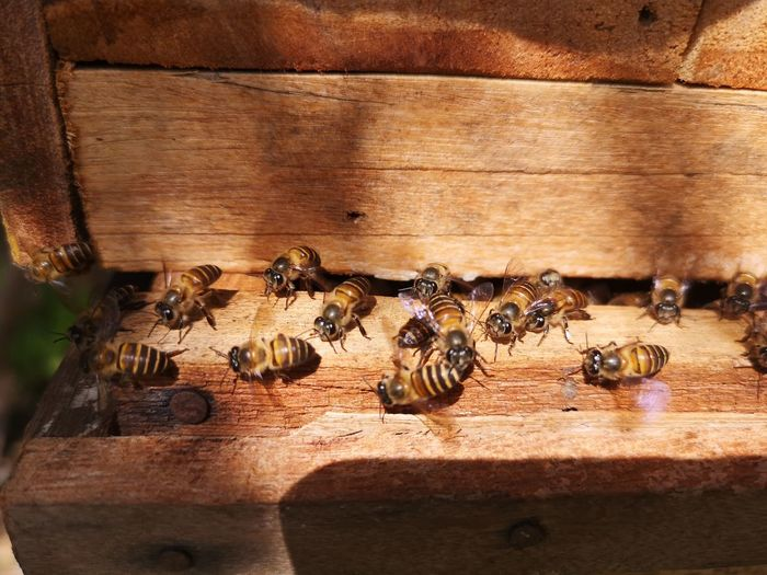 Close-up of bees on wood