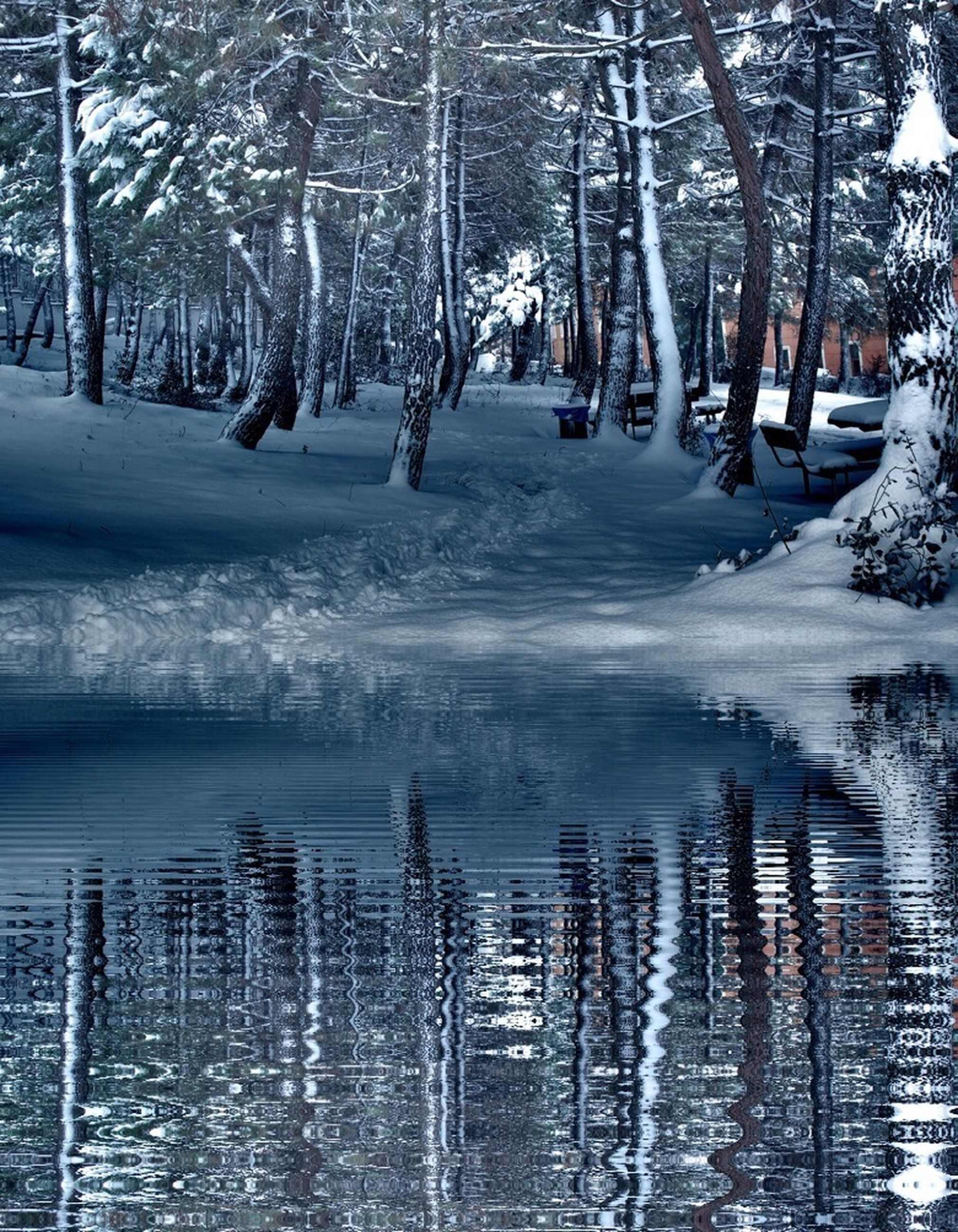 winter, cold temperature, snow, water, tree, frozen, season, bare tree, waterfront, nature, reflection, lake, tree trunk, tranquility, ice, tranquil scene, day, beauty in nature, weather, river