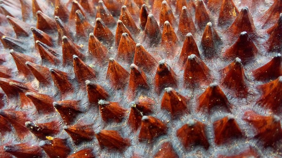 Full Frame Backgrounds Pattern Textured  Nature Natural Pattern Macro Brown Wallpaper Wall Art Beauty In Nature Exotic Backdrop Close Up Thorn Concept Abstract EyeEm Best Shots EyeEm Nature Lover Lifestyles Landscape Wood Skin