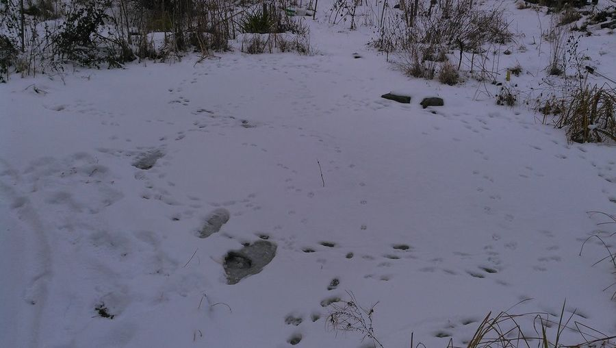 High angle view of trees on snow covered field