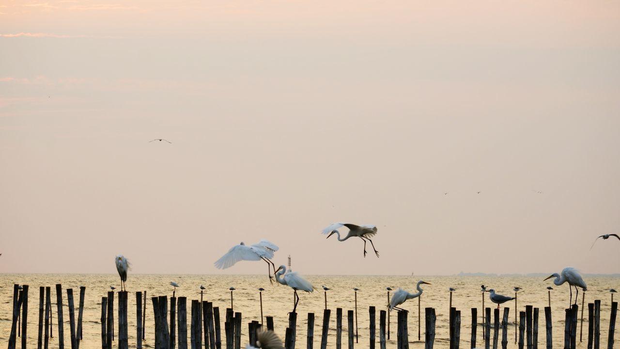 SEAGULL FLYING OVER WOODEN POST AGAINST SKY