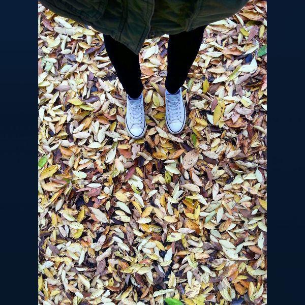 Leaves Autumn Autumn Colors Enjoying Life