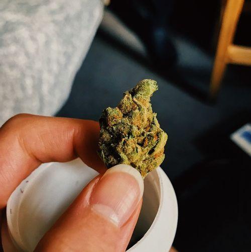 Cropped hand holding marijuana
