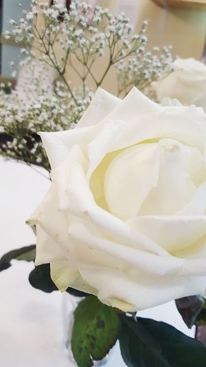 Nature White It's Cold Outside Winter Check This Out Enjoying Life Weather Composition Plants 🌱 Flower Roses Winter Wonderland Beauty In Nature Lost Power In Nature