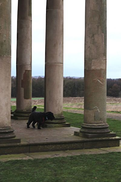 Exploring with Lola! Architectural Column Built Structure Travel Destinations Architecture Day Real People Outdoors Nature History Tree Sky Men Dogwalking Dogs Dogslife Scenic View HardwickPark