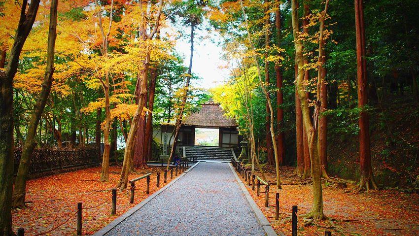 法然院 京都 Kyoto Autumn Kyoto, Japan 2015  Kyoto Autumn Kyototrip Autumn Colors Autumn Leaves Enjoying Life Hello World Relaxing Beauty In Nature Travel Destinations