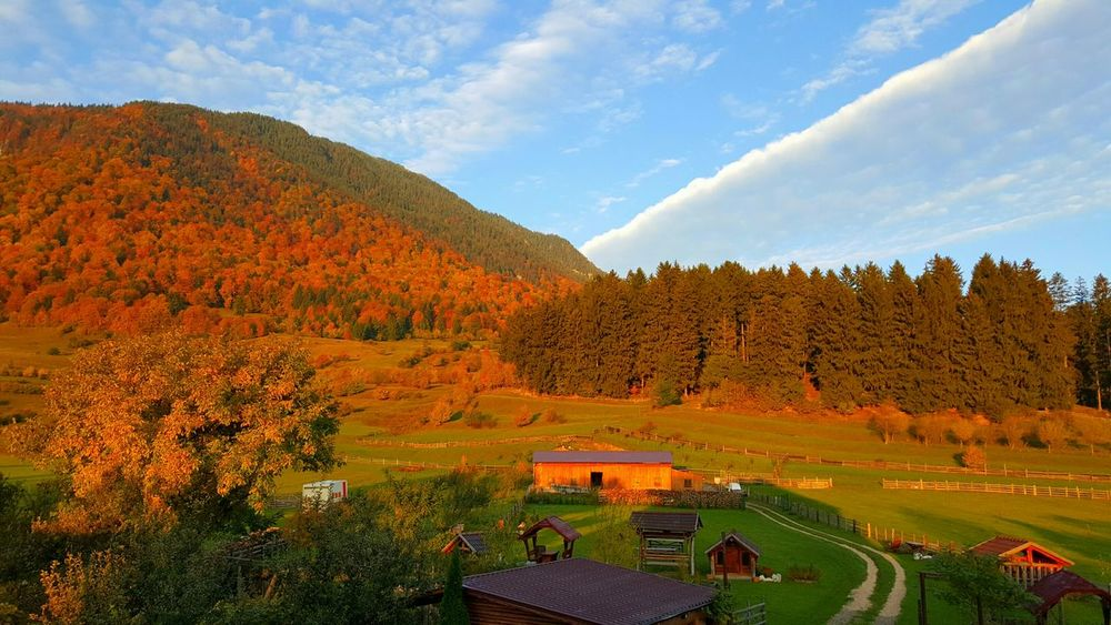 Rural Farmland Pasture Autumn Romania Autumn Colors Tranquil Scene Transylvania Bucegi Natural Park Sunrise
