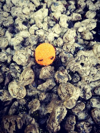 Smiley Nuss Nick Nacks Ants Stones Check This Out Taking Photos Hanging Out Seeufer Makro