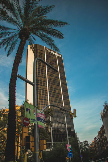 Barcelona, Spain - 09.11.2018 National day of Catalunya (Diada de Cataluña) Barcelona Barcelona, Spain SPAIN Architecture Building Building Exterior Built Structure City Coconut Palm Tree Day Low Angle View Modern Nature No People Office Office Building Exterior Outdoors Palm Leaf Palm Tree Plant Sky Skyscraper Tall - High Tree Tropical Climate