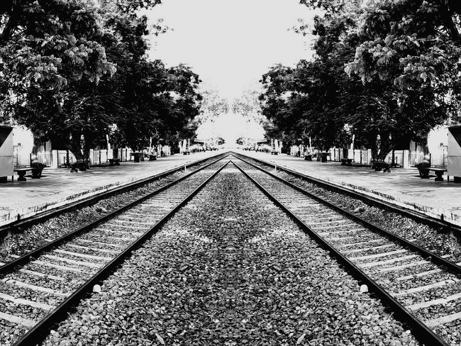 Tree The Way Forward Railroad Track Day Outdoors No People Sky Nature Railway Track Railway Rail Live For The Story Place Of Heart