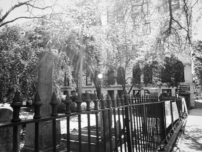 Camera 360 App South Carolina Trip South Carolina Charlestonsc Charleston SC Charleston Cemetery Photography Cemetery_shots Cemetery Ironwork  Iron Fence Iron Blackandwhite Blackandwhite Photography Black And White Collection  Shadows & Lights Light And Shadow Light And Shadows Treescollection Tree_collection  Trees Architecturephotography Architecture_collection Architecture Lampost