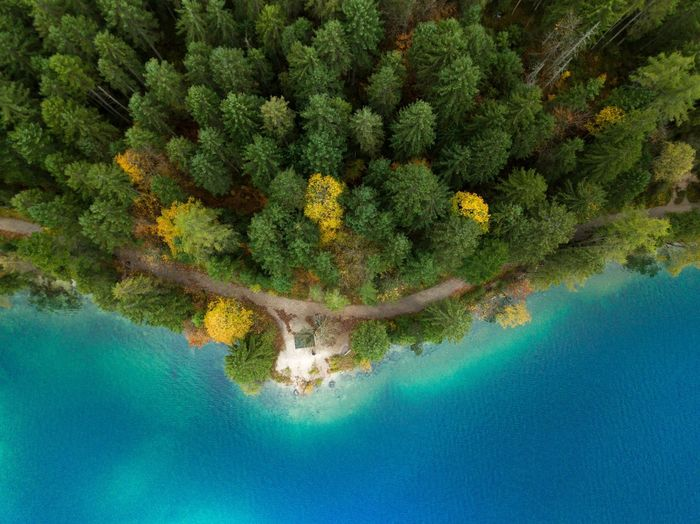 High angle view of trees in forest by sea
