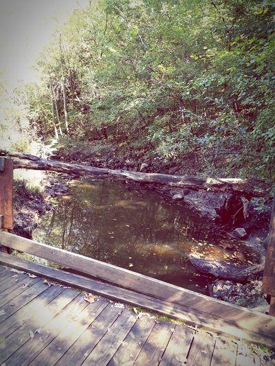 Tree No People Day Water Nature Outdoors Bridge View Nature Beautiful Nature
