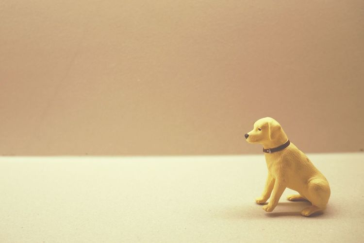 Dog Dog Love Doglover Dog❤ Animal Pets Copy Space Dog One Animal Side View Indoors  Cute No People Studio Shot Animal Themes EyeEmNewHere