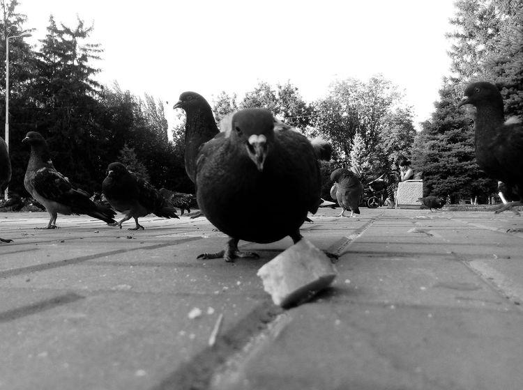 Bird Animal Themes Pigeon Day Outdoors Monocrome Black And White Photography City Animal No People Rostov-on-Don площадь птицы город голуби Square кормитьголубей