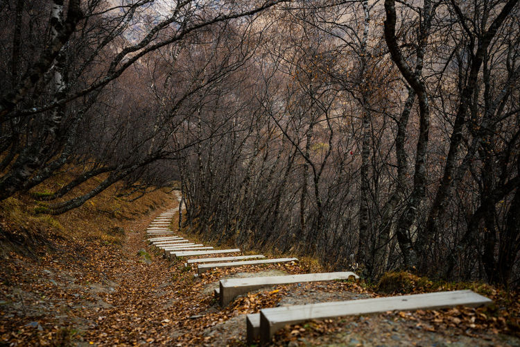 Empty footpath amidst bare trees in forest