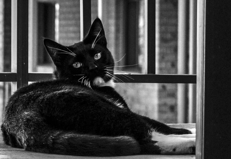 Cat A6000 Pet Photography  Cats Pets Sony A6000