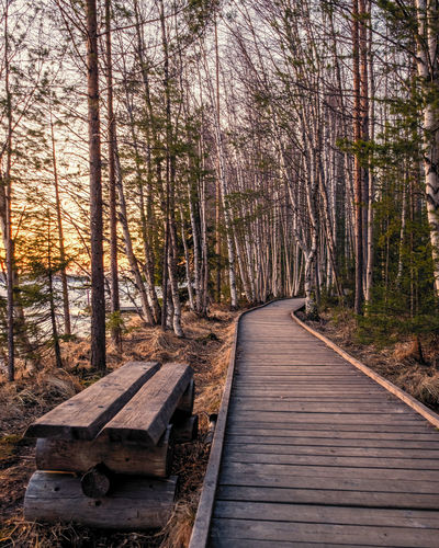 Wooden bench amidst trees in forest