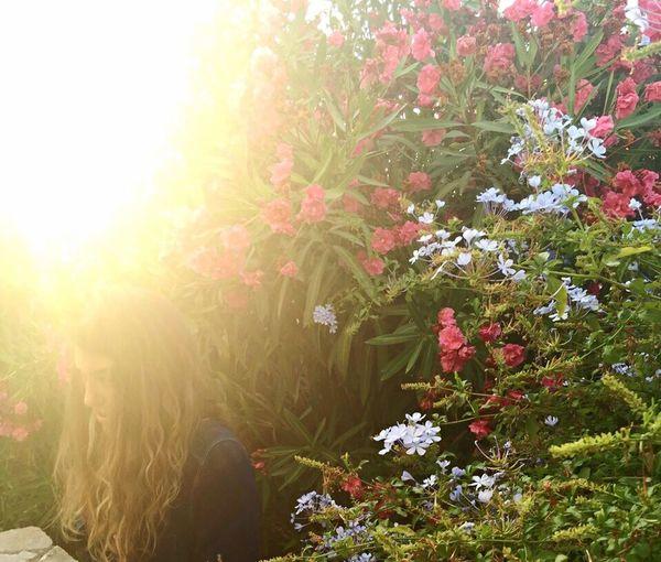 Gunes Isik çiçek Böcek Rengarenk