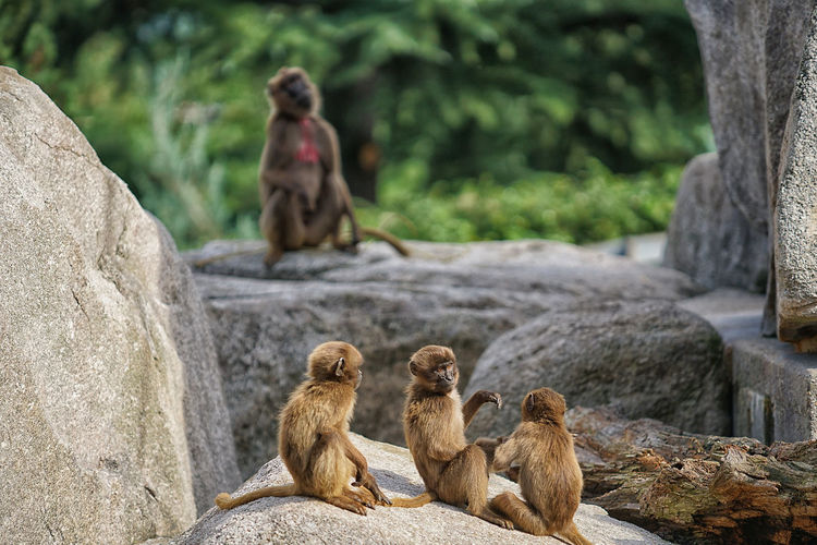 Monkey sitting on rock
