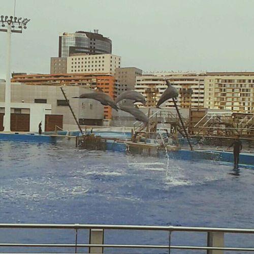❤❤❤❤ awwww delfini Dolphin Delfini Cute Animals Wonderful
