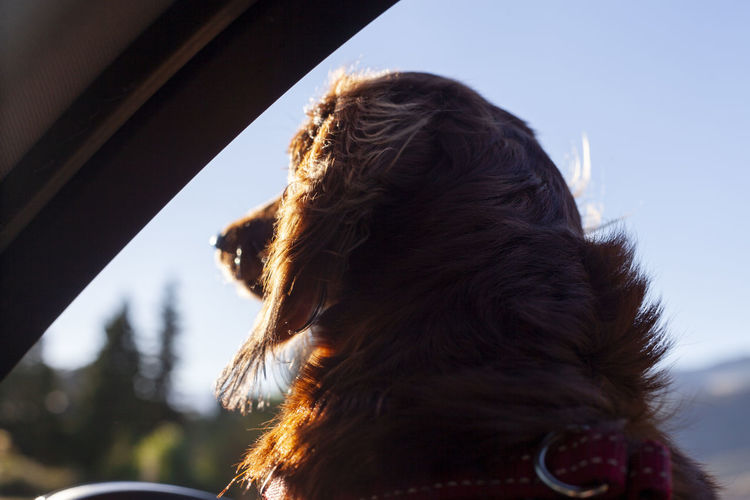 Close-up of woman with dog against sky