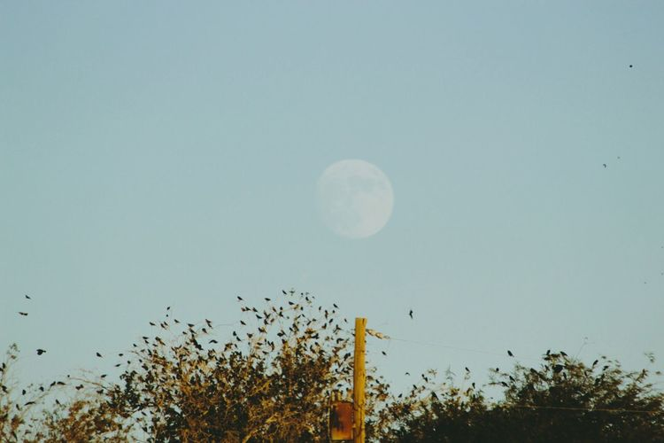 Moon Outdoors Sky Nature