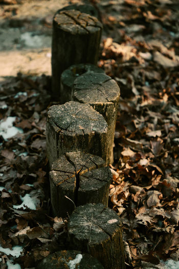 Delimitation In A Row Nature Wood Barrier Close-up Day Demarcation Floor Leaf Leaves Nature No People Outdoors Posts Snow Withered  Wooden Posts