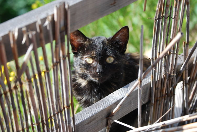 High Angle View Of Black Kitten Seen Through Damaged Fence