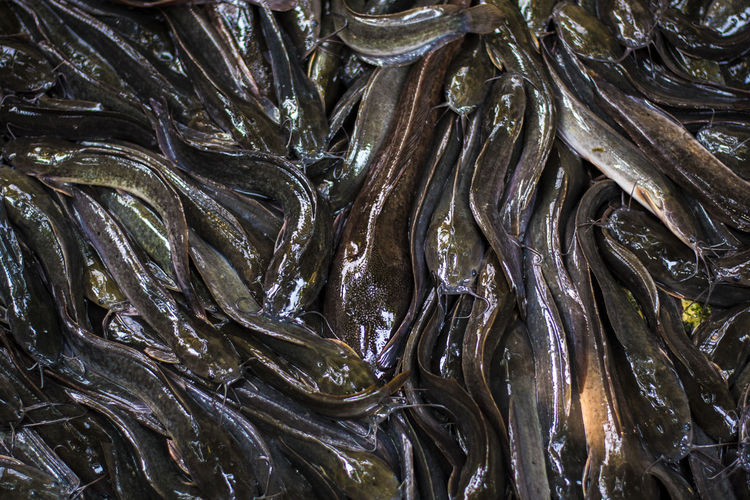 Catfish Full Frame Backgrounds Seafood No People Food And Drink Food Close-up Large Group Of Objects Indoors  Textured  Freshness Fish Abundance Wellbeing Healthy Eating High Angle View Animal Pattern Still Life