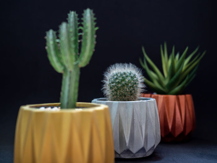 Colorful geometric planters. Painted concrete planters for home decoration Plant Green Color No People Freshness Indoors  Potted Plant Growth Nature Close-up Cactus Succulent Plant Beauty In Nature Studio Shot Yellow Flower Botany Focus On Foreground Leaf Black Background Houseplant Flower Pot Golden Copper  Silver  Pottery