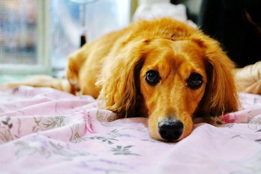 Dog Pet Cute Cute Pets Love Warmth EyeEm
