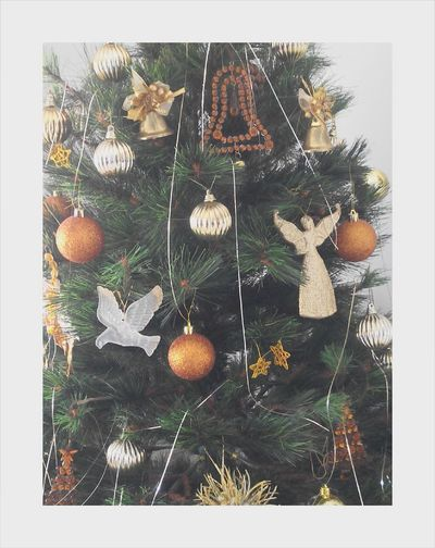 Christmas Tree Christmastime Christmastree Vintage Christmas Decorations Christmas Time Christmas Is Coming Christmas Trees Christmas Tree ~ Christmas Spirit MerryChristmas Christmas Tree!