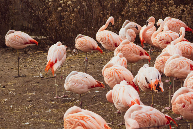 do you want to dance? Flamingo Bird Colony Group Of Animals Pink Color Animal Themes Flock Of Birds Avian Large Group Of Animals