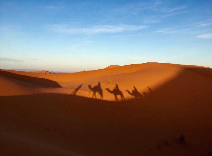Desert life Camel Morocco Moroco Merzouga Desert Sand Dune Arid Climate Sand Landscape Sky Real People