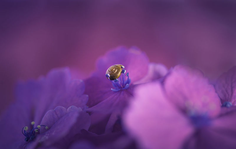 Close-up of snail on purple flower